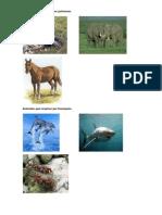 Animales Que Respiran Por Pulmones