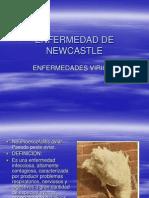 ENFERMEDAD DE NEWCASTLE