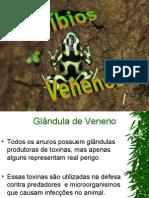 Anuros_Venenosos