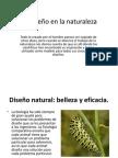 El diseño en la naturaleza