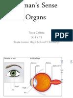 Human's Sense Organs