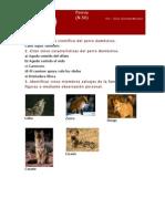 Especialidades+Perros