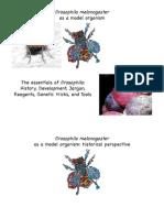 Drosophila as a Model