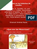 Micorrizas en Los Helechos de Lezotho