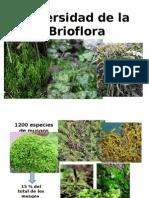 brioflora mexicana