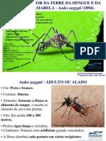 apresentacao2_diaD