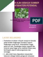 Bioaktif Pada Tanaman Mangrove