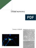 Anatomia Układu Nerwowego