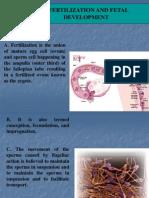 Fertilization and Fetal Development