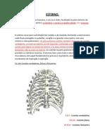 Anatomia e Fisiologia. Prof° Marcelo - Wings.