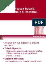 Histologie Curs 5