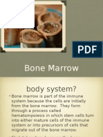 Bone Marrow - 4a