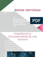 Import an CIA Neuronas Sistema Nervioso Humano 3