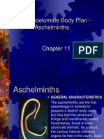 Chapter 11 Pseudocoelomate Body Plan Student