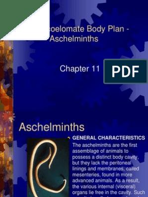 pseudocoelomatul este un aschelminthes conceput pentru corp