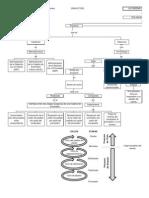 Mapa Conceptual Cadena de Suministro