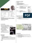 Australopithecus Garhi - Cheatsheet