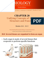 3. anatomi dasar 2