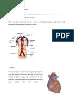 Sistem Peredaran Darah Manusia 1