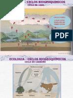 207_40604_ecologia_-_ciclos_biogeoquimicos