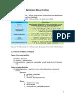 Epithiliam Tissue Outline