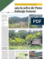 La coca que mata a la selva de Puno