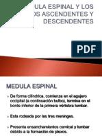LA MÉDULA ESPINAL Y LOS TRACTOS ASCENDENTES Y