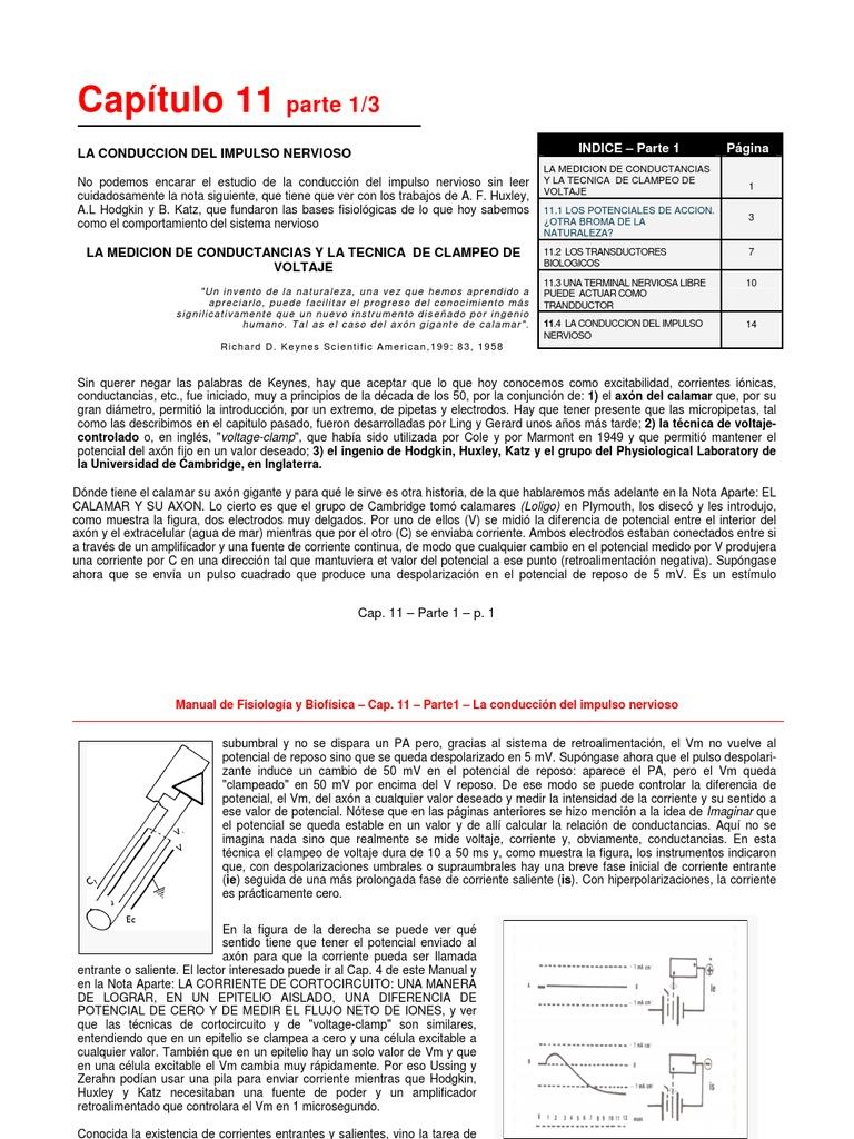Lujo Capítulo 11 De La Anatomía Y Fisiología Composición - Anatomía ...