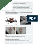 Objetivos práticos do terceiro exercício escolar de Anatomia I