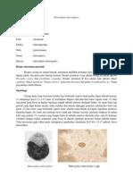 Klasifikasi Heterophyes heterophyes