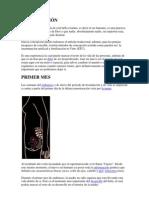Proceso de Fecundacion y Desarrollo