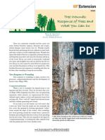 Tree Wounds Response of Trees and What You Can Do
