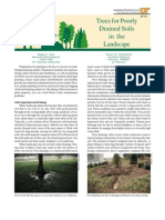 Trees for Poorly Drained Soils in the Landscape