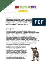 Perro Salvaje de Africa