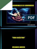 sistema digestivo carnivoros