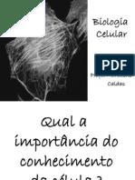 biocel_fisio