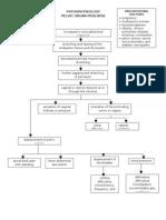 Pathophysiology Pelvic Organ Prolapse