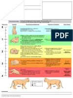 CSU Acute Pain Scale Cat