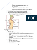 Anatomy Final
