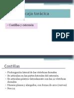 4. Tórax, clavícula y escápula