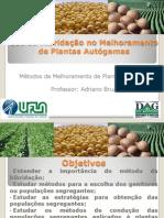 Uso da Hibridação no Melhoramento de Plantas Autógamas-GAG 106[1]