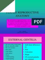 Female Reproductive Anatomy-1