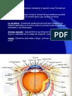 1.4 Anatomia Ojos (1)