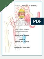 Revision Glomerulonefritis Membranosa