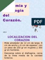 Anantomia Corazon Rifada