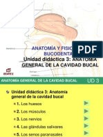 UD+III+-+Anatomía+general+de+la+cavidad+bucal