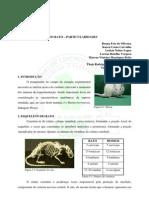 Anatomia Do Rato