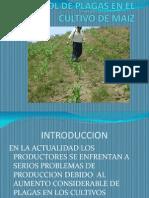 Control de Plagas en El Cultivo de Maiz