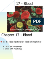 Chapter 17 - Blood
