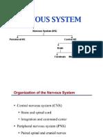 Nervous System - Final